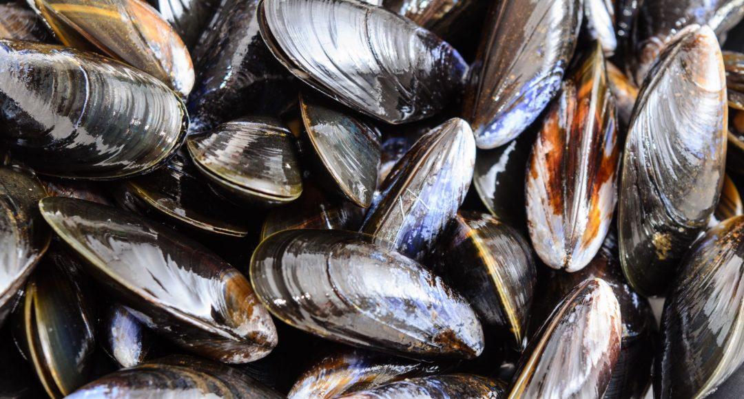 Seafood Moray